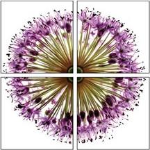 Autronic Obraz bodlák OBK018 - 60x60 cm